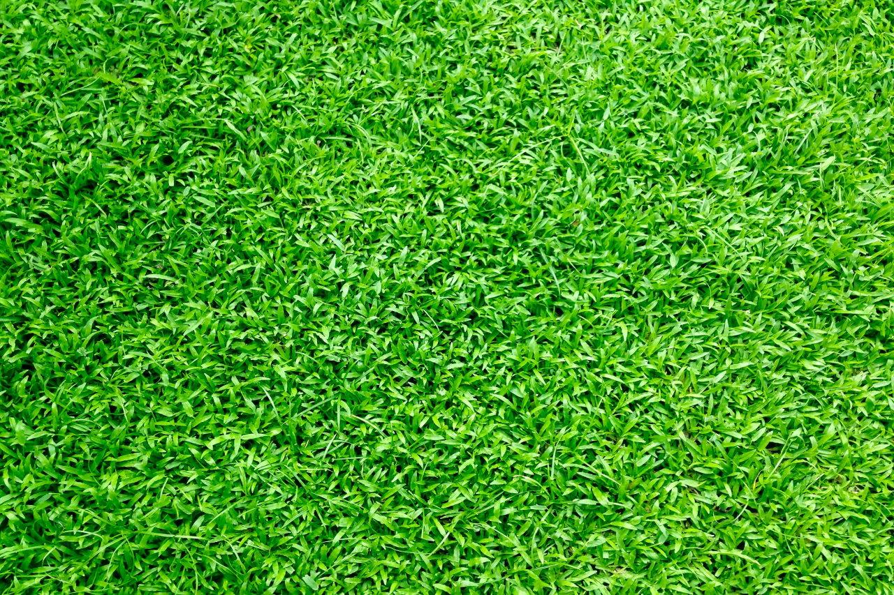 Jak przygotować odpowiednio nawierzchnię do hokeja na trawie?